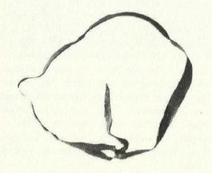 Foto reperto cintura dell'uomo di Tollund (Danimarca), IV-III a.C..